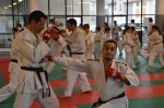 judo 141