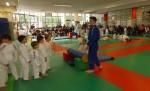 Animation Baby Judo (73)